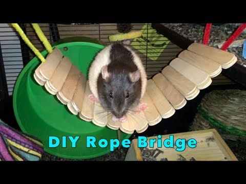 DIY Popsicle Stick Bridge For Rats