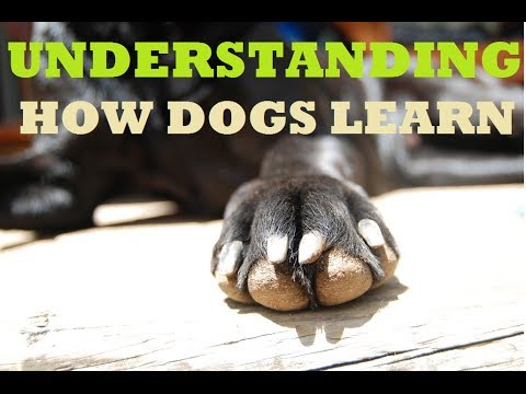 How to train your dog - Understanding training methods and techniques
