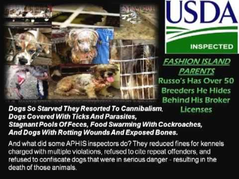 RUSSO'S PET EXPERIENCE-CITY NEWPORT BEACH CALIFORNIA CRIMINAL CANINE CRUELTY & PUPPY MILL INVESTMENT