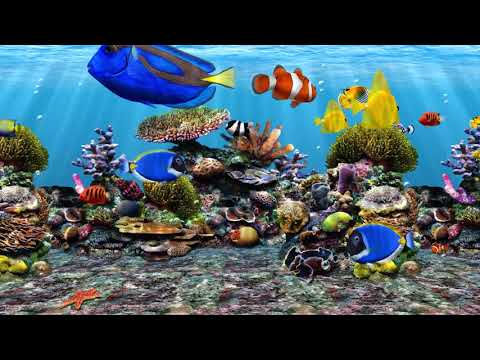 3D Fish School Screensaver Aquarium Izle Akvaryum Tropikal Balıklar