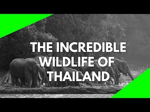 Wildlife Documentary: Thailand, a land of beautiful nature and wildlife. Watch, discover and learn