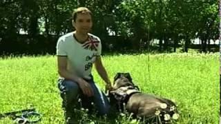 В Чернигове собаки сняли фильм о коте  ecity cn ua