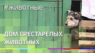 Дом престарелых для животных появился в Подмосковье