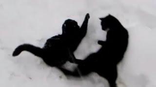 Cats games. Игры котов