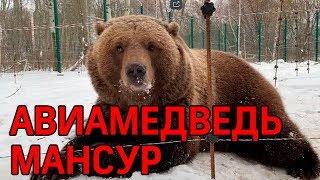 Спасённый лётчиками медведь Мансур стал видеоблогером