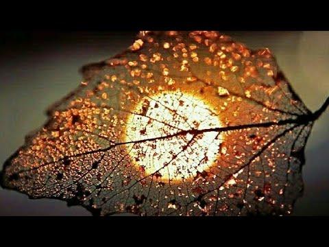 Beautiful Flower / Nature Whatsapp Status Video 💕💕 thumbnail