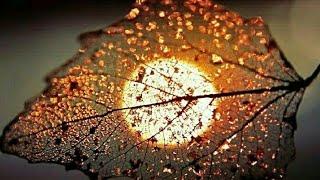 Beautiful Flower / Nature Whatsapp Status Video ????????