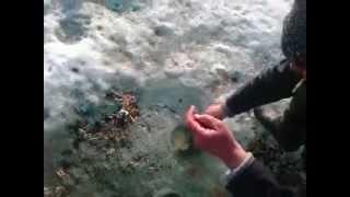 зимняя рыбалка в Казахстане на Кельтах март 2014 год.