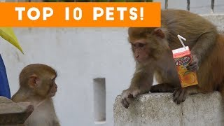 Top Ten Funny/Cute Pet Videos of September Part 1