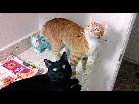 NEW Kitty Pad! Vlog #3