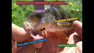 Пошли за окунем, а поймали... Рыбалка. Клевый день!