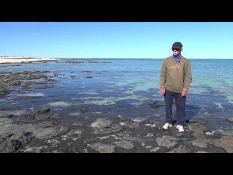 Supratidal, intertidal, subtidal zones