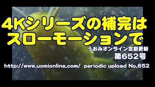 スローモーションで振り返る【水中動画の定期更新No.652】