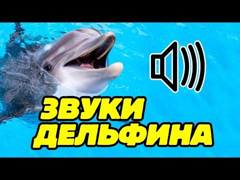 Звуки дельфинов, как