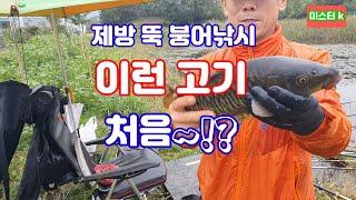 #제방 뚝 붕어낚시 #갓낚시 #향어