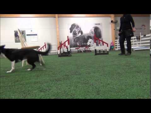 Pixie Dogdancing Tricks