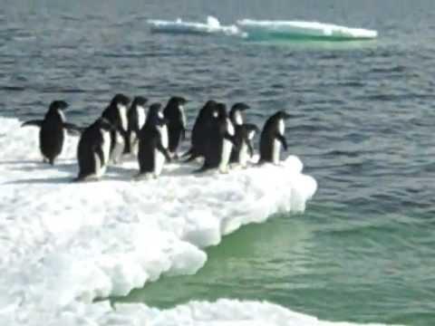 Adelie Penguins, Cape Royds, Antarctica