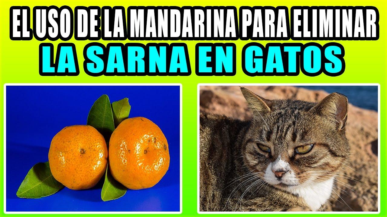 como curar la sarna en gatos con remedios caseros