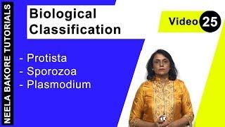 Biological Classification - Protista - Sporozoa - Plasmodium