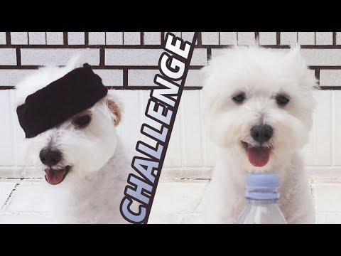 Dog Bottle Cap Challenge with Bird Box 小狗蒙眼瓶蓋挑戰