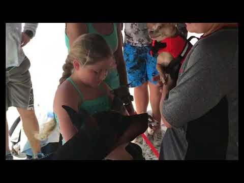 Teaching Your Dog To Surf With Surf Gidget The P