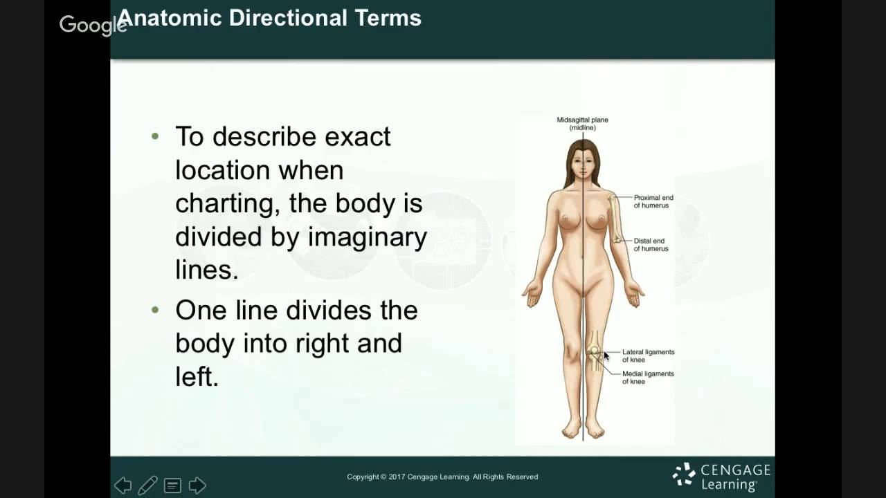 Anatomy & Physiology Review - YouTube