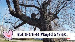 Best Tree Climbing Cat Breed Norwegian Forest Cat