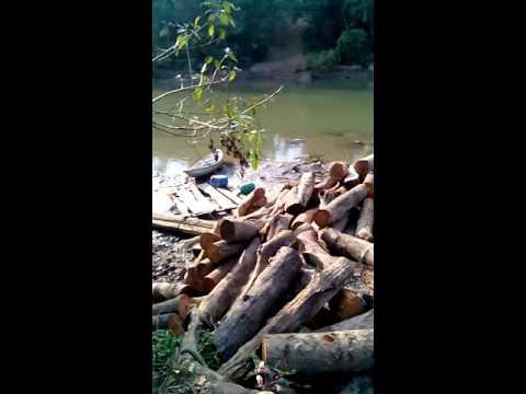 Lâm tặc đã khai thác hết gỗ giờ đến củi.