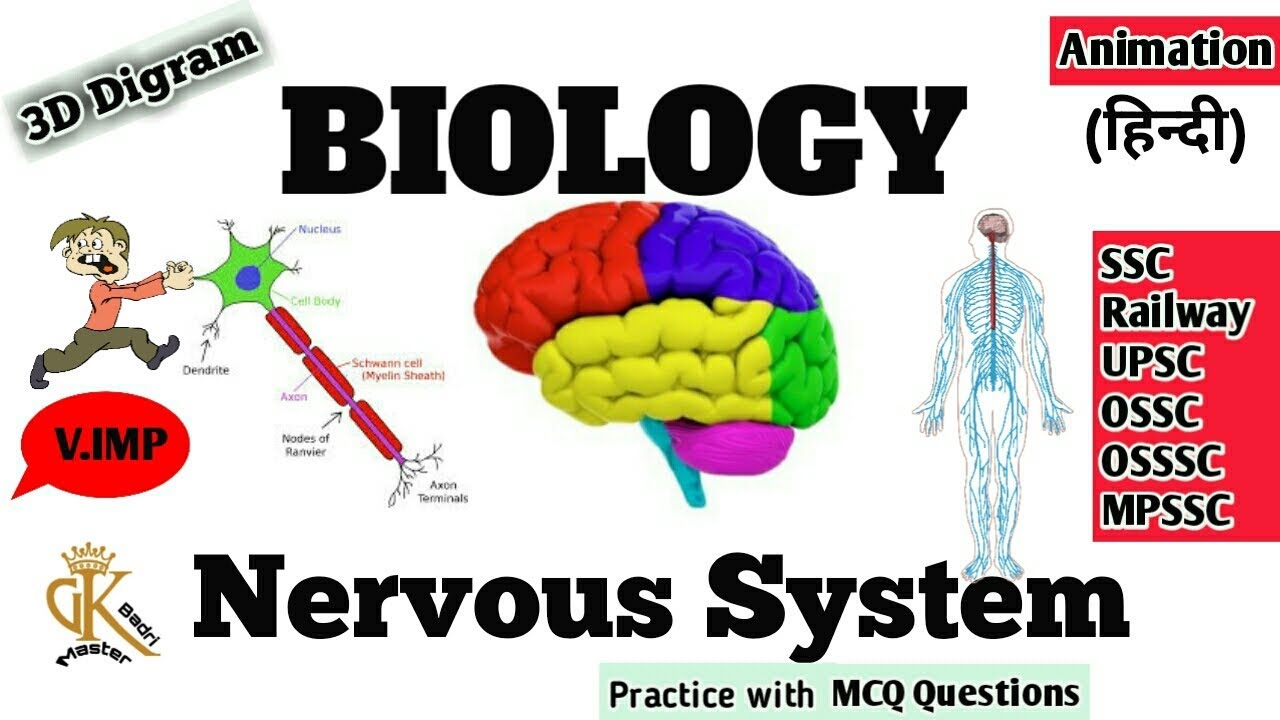 Central nervous system topic in hindi biology brain spinal central nervous system topic in hindi biology brain spinal cord science gk master ccuart Image collections