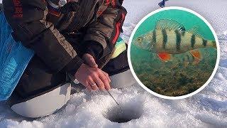 поиск окуня зимой на незнакомом водоеме: Прикормка и реальные поклёвки  Рыбалка с Fishingsib