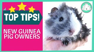 Top Ten Tips For New Guinea Pig Owners!