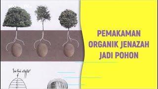 PEMAKAMAN ORGANIK JENAZAH JADI POHON