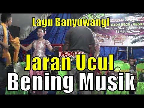 JARAN UCUL - Banyuwangi - BENING MUSIK - Bastomi - Plasma Production - Suara Smansa - Plasmaducation