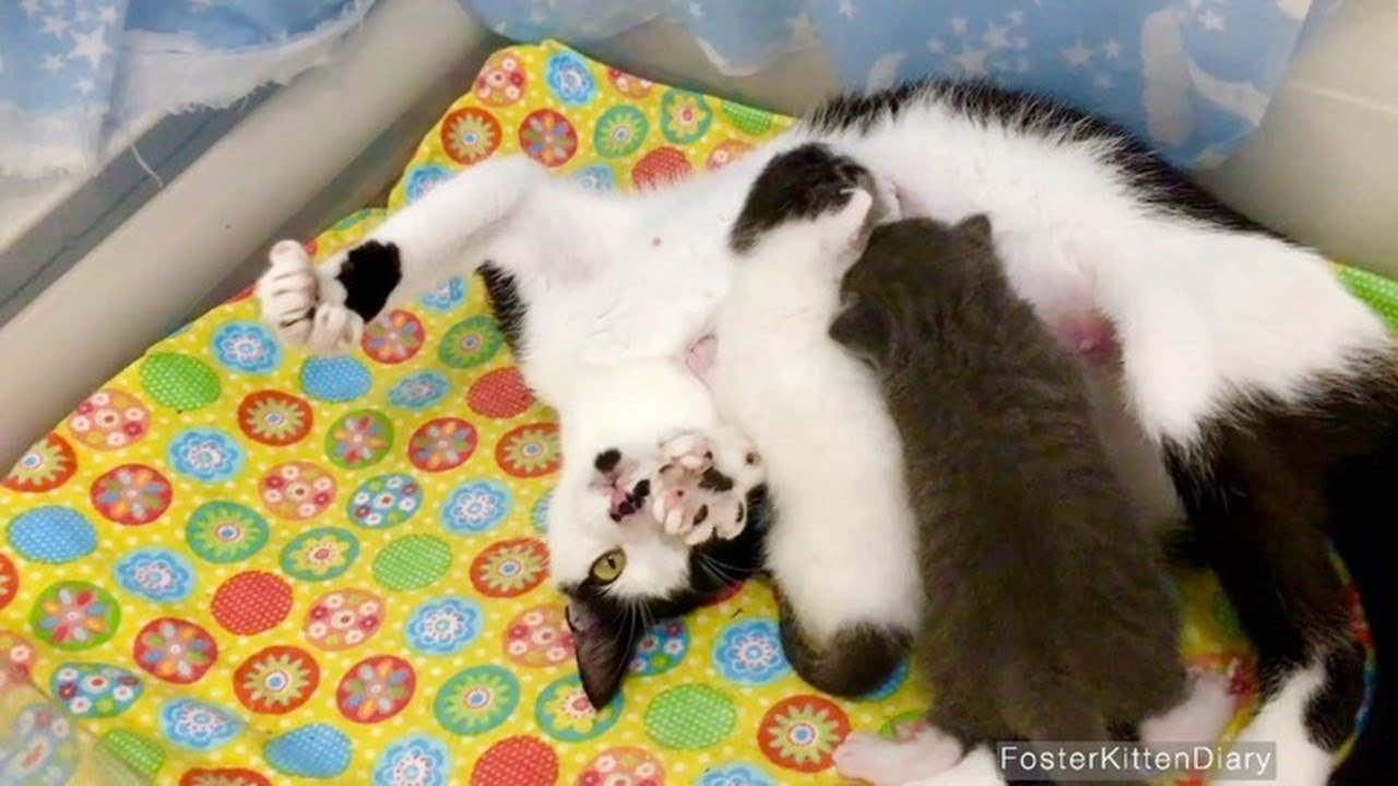 Rescue Beautiful Pregnant Cat From Colony Who Gives Birth 2 Super Cute Kittens
