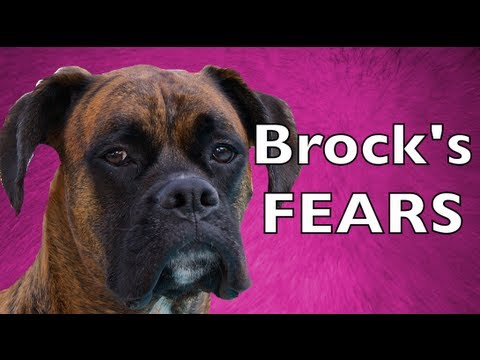 The Silly Fears of Brock the Boxer Dog