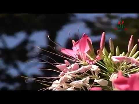 Pran Chay Chokkhu Na Chay featuring SASWATA SANYAL