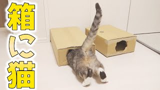 cute cats want to get in the box