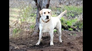 Эта собака пропала 10 лет назад. Но звонок из приюта перевернул историю