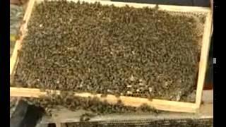 Kỹ thuật nuôi ong mật chúc các bạn thành công nhé.