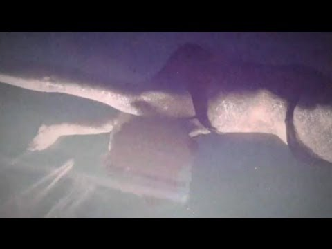 Echo Lake - Buried At Sea (official video) mp3