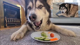 Husky tries Salad after failing his latest weigh in