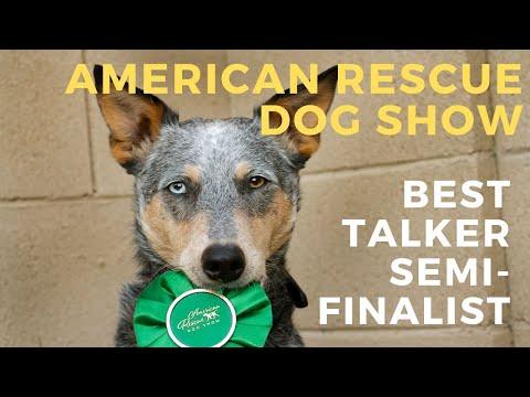 Kronos American Rescue Dog Show Best in Talking Semi Finalist