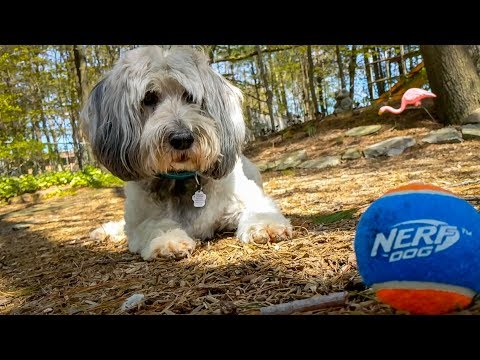 Nerf Dog Toys - Playing Test & Review