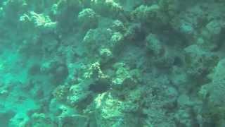 мое первое погружение-дайвинг в египте на красном море среди кораллов(неописуемое впечатление, кто ни разу этого не делал, начинайте свой первый раз именно на красном море, ну..., 2014-09-25T16:44:48.000Z)