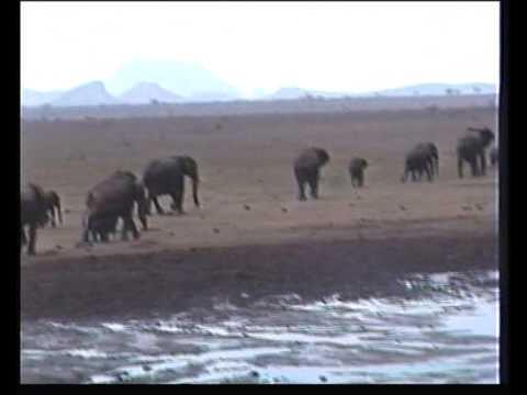 Africa Kenya Mombasa Safari Tsavo National Park East & West Part 1 of 5