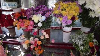 بالفيديو: الورد الاحمر .. لغة المحبين في