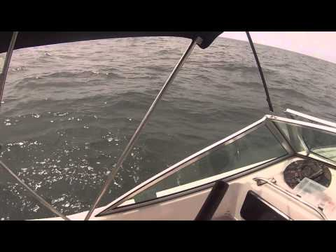 Cape Charles Cobia Fishing