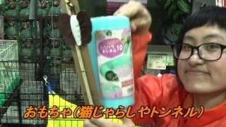 ペットワールドアミーゴの店舗&おすすめアニマル紹介動画! フェレット...