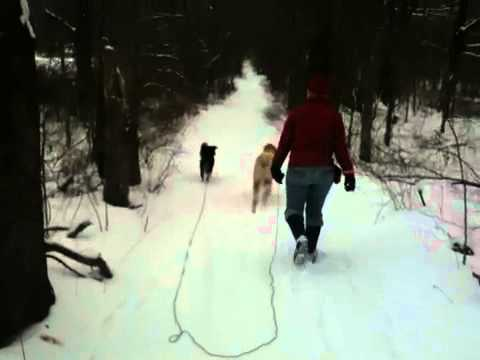 Snowy woods walk with dogs