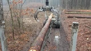 Leśny Włoczykij #vlog9 kiepskie drewno Załadunek Dłużycy i inne opowieści leśne Cz.2/2